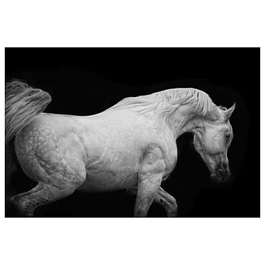 Arabian Stallion by Snowhite, Canvas, 24
