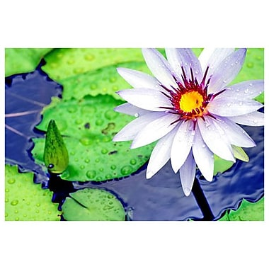 Water Lilly 2 by Ringlever, Canvas, 24