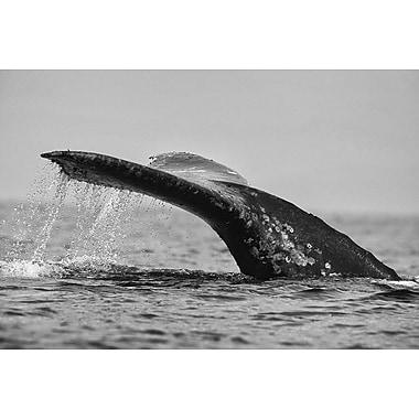 Queue de baleine grise de Munsch, toile, 24 x 36 po