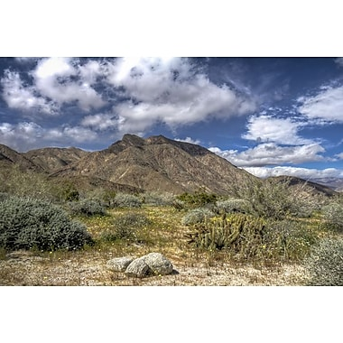 Anza Borrego Palm Canyon by Polk, Canvas, 24