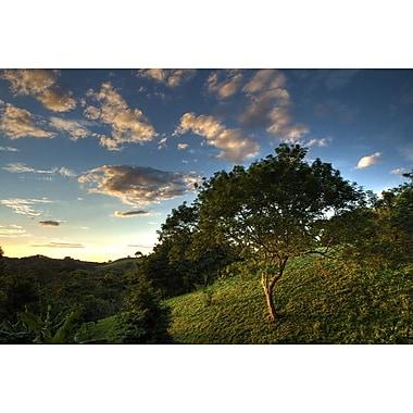 Arbres de la jungle en soirée II de Nalbandian, toile, 24 x 36 po