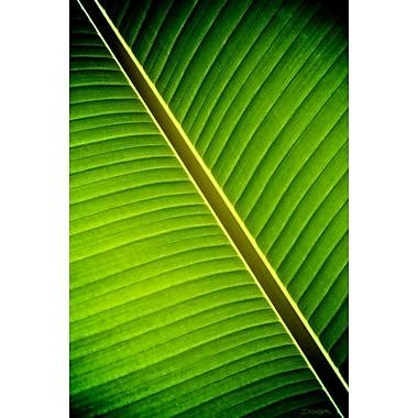 Ombre tropicale par Nelson, toile, 24 x 36 po