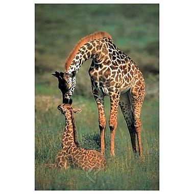 Maman girafe et son bébé, toile tendue, 24 x 36 po
