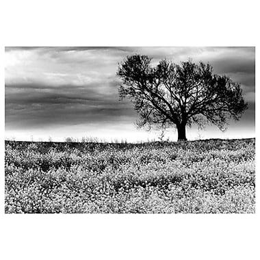 Arbre dans un champ, Tennessee, toile tendue, 24 x 36 po