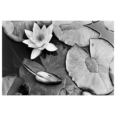 Water Lily Splendor Central Park, Stretched Canvas, 24