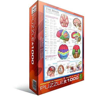 Human Body (The Brain) Puzzle, 1000 Pieces