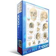 Human Skull Puzzle, 1000 Pieces
