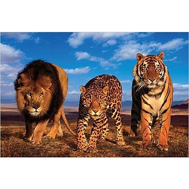 Three Big Cats Poster, 36