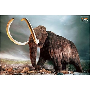Woolly Mammoth Poster, 24