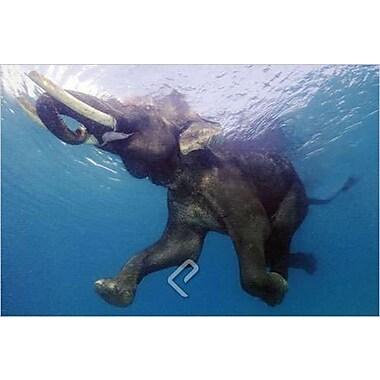 Éléphant sous l'eau, affiche, 36 x 24 po