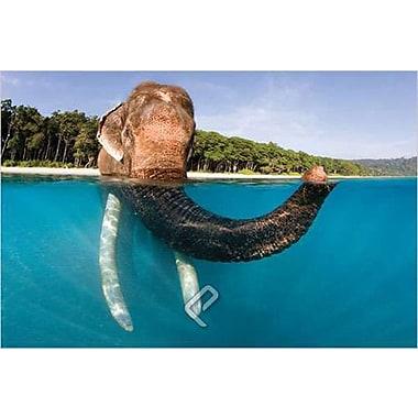 Éléphant qui nage, affiche, 36 x 24 po