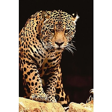 Leopard Poster, Big Cats, 24