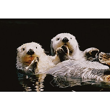 Sea Otters Poster, 24