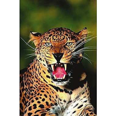 Leopard Poster, 24
