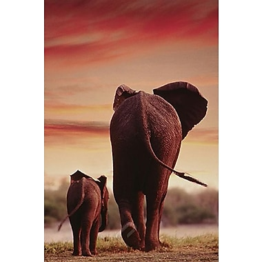 Elephant Walking with Calf Poster, 24