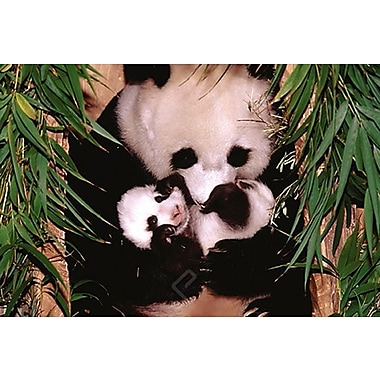 Panda Mother and Baby Poster, 24