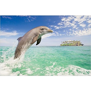 Dolphin Leaping Poster, 24