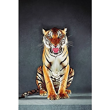 Tiger Poster, 24