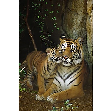 Tiger with Cub Poster, 24