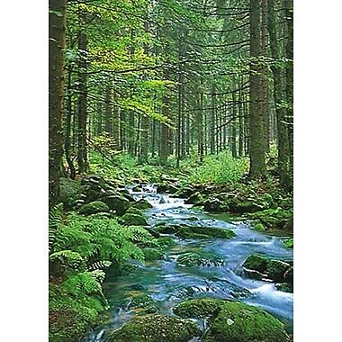 Ruisseau en forêt, affiche, 24 x 36 po