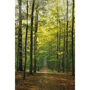 """Forest Path Poster, 24"""" x 36"""""""