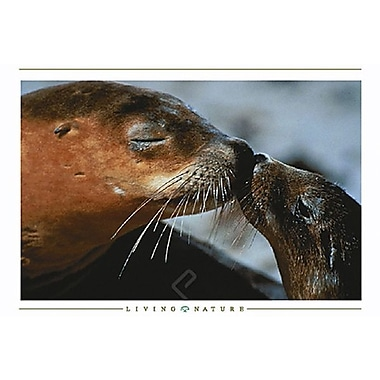Seals Kissing Poster, 36