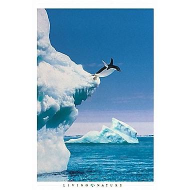 Penguin Poster, 24