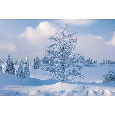 Winter Tree Poster, 24