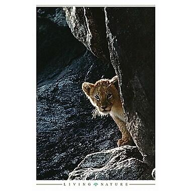 Tiger Cub Poster, 24