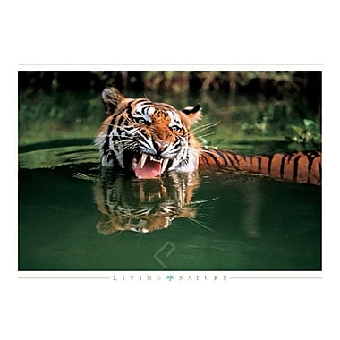 Tiger in the Water Poster, 24