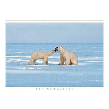 Polar Bears Poster, 24