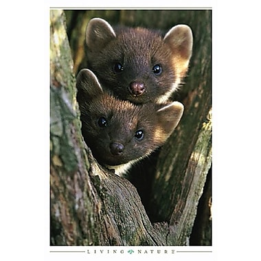 Pine Martens Poster, 24