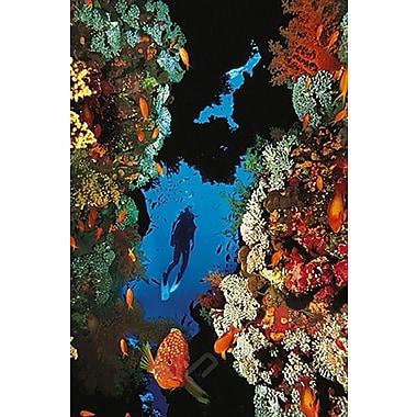 Récif de corail, affiche, 24 x 36 po