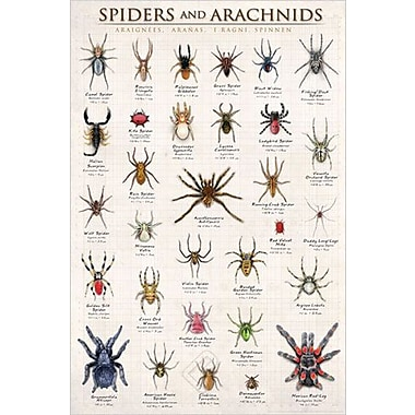 Spiders and Arachnids Poster, 24
