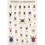 """Spiders and Arachnids Poster, 24"""" x 36"""""""