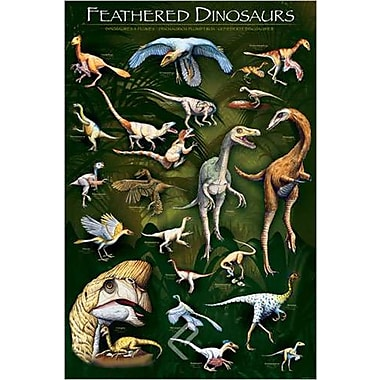 Feathered Dinosaurs 1 Poster, 24