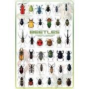"Beetles Poster, 24"" x 36"""