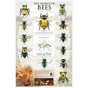 """The World Of Bees Poster, 24"""" x 36"""""""