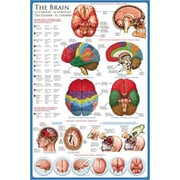 """The Brain Poster, 36"""" x 24"""""""