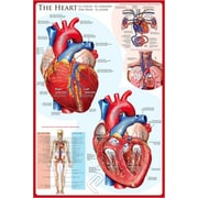 """The Heart Poster, 24"""" x 36"""""""