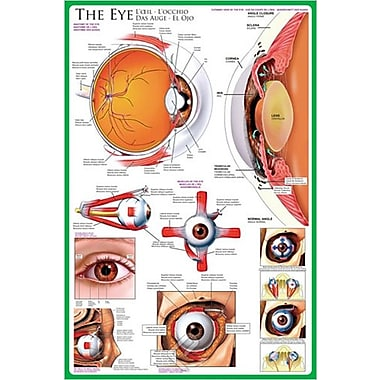 The Eye Poster, 24