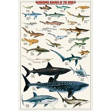 Dangerous Sharks Poster, 24