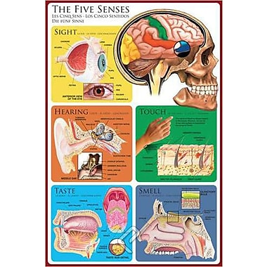 The Five Senses Poster, 36