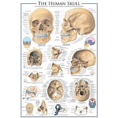 The Skull Poster, 24