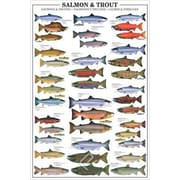 """Salmon and Trout Poster, 36"""" x 24"""""""