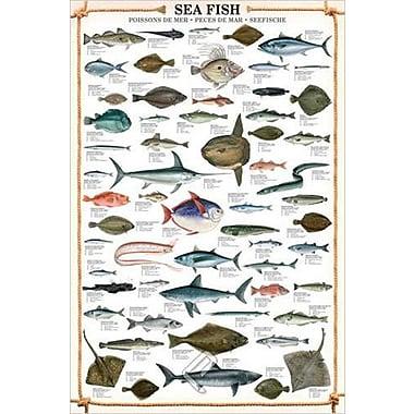 Affiche Poissons de mer, 24 x 36 po