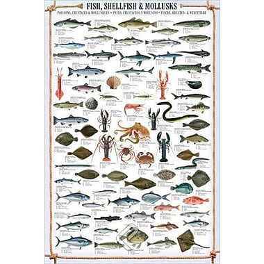 Fish and Shellfish Poster, 24