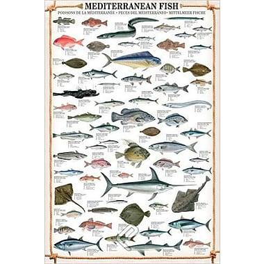 Mediterranean Fish Poster, 24