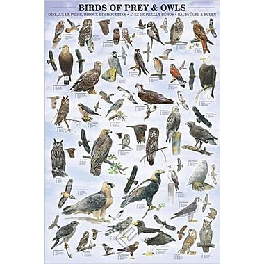 Birds of Prey and Owls Poster, 24
