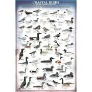 "Coastal Birds Poster, 24"" x 36"""